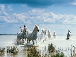 horses white snow