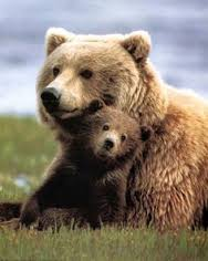 bear mama and cub - Copy - Copy