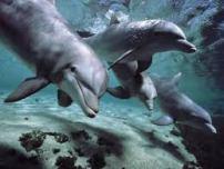dolphins - Copy - Copy