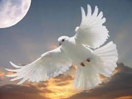 dove at night - Copy - Copy