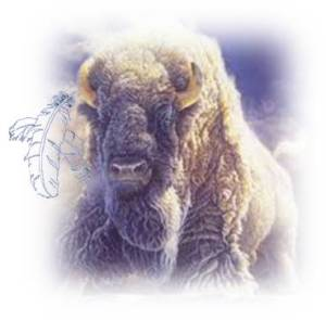 Feathered Buffalo - Copy