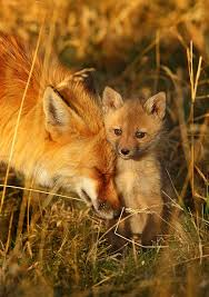 fox and kit - Copy - Copy