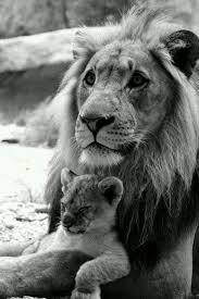 lion with cub - Copy - Copy