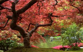 purposeful entreat tree